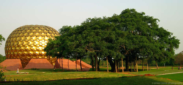 india matrimandir tree big resized 600